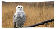 Snowy Owl On Branch Bath Towel
