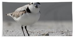 Snowy Plover Hand Towel