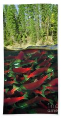 Sockeye Salmon Run Hand Towel