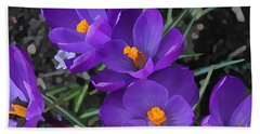 Bath Towel featuring the photograph Soft Purple Crocus by Judy Palkimas