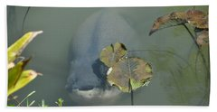 #south American Pacu Bath Towel