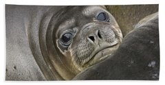 Southern Elephant Seal Pup South Hand Towel