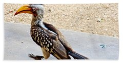 Southern Yellow-billed Hornbill In Kruger National Park-south Africa Hand Towel