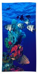 Spadefishes With Nassau Grouper Hand Towel
