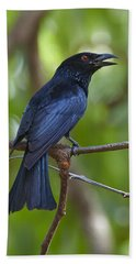 Spangled Drongo Calling Queensland Bath Towel