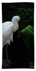 Spoonbill Morning Bath Towel by Greg Patzer
