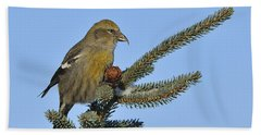 Spruce Cone Feeder Hand Towel by Tony Beck