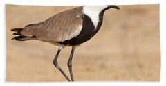 Spur-winged Lapwing Vanellus Spinosus Hand Towel by Eyal Bartov