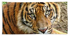 Staring Tiger Bath Towel