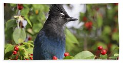 Steller's Jay And Red Berries Hand Towel