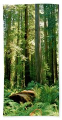 Stout Grove Coastal Redwoods Hand Towel by Ed  Riche