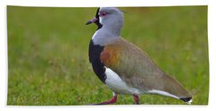 Strutting Lapwing Hand Towel by Tony Beck