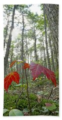Sugar Maple In Old-growth Canadian Hand Towel
