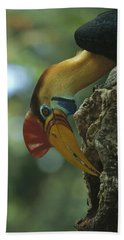 Sulawesi Red-knobbed Hornbill Male Hand Towel