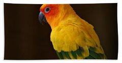 Sun Conure Parrot Hand Towel