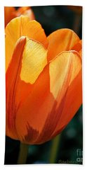 Hand Towel featuring the photograph Sun Kissed Tulip by Barbara McMahon