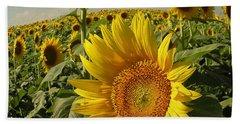 Kansas Sunflowers Hand Towel