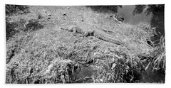 Bath Towel featuring the photograph Sunny Gator Black And White by Joseph Baril