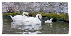 Swans And Cygnets In Brugge Canal Belgium Bath Towel