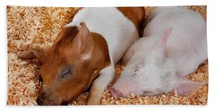 Sweet Piglets Nap Art Prints Hand Towel by Valerie Garner