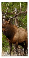 The Bull Elk Hand Towel by Steven Reed