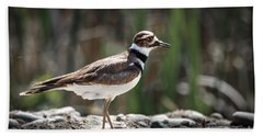The Killdeer Hand Towel by Robert Bales