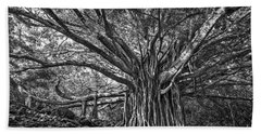 The Large And Majestic Banyan Tree Located On The Pipiwai Trail  Hand Towel