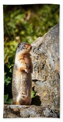 The Marmot Hand Towel by Robert Bales