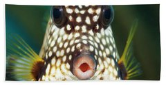The Smooth Trunkfish  Lactophrys Bath Towel