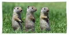 Three Baby Uinta Ground Squirrles Hand Towel