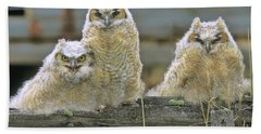 Three Great-horned Owl Chicks Hand Towel