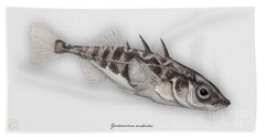 Three-spined Stickleback Gasterosteus Aculeatus - Stichling - L'epinoche - Espinoso - Kolmipiikki Hand Towel