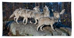 Timber Wolf Pack Hand Towel by Wolves Only