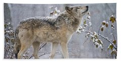 Timber Wolf Pictures 188 Hand Towel by Wolves Only