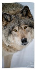 Timber Wolf Pictures 255 Hand Towel by Wolves Only