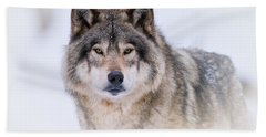 Timber Wolf Pictures 256 Hand Towel by Wolves Only