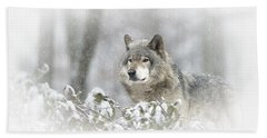 Timber Wolf Pictures 279 Hand Towel by Wolves Only