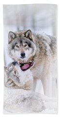 Timber Wolf Pictures 56 Hand Towel by Wolves Only