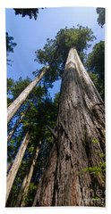 Towering Redwoods Hand Towel by Paul Rebmann