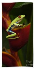 Designs Similar to Tree Frog 3 by Bob Christopher