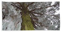 Bath Towel featuring the photograph Tree In Winter by Felicia Tica