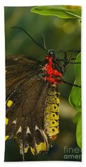 Hand Towel featuring the photograph Troides Helena Butterfly  by Olga Hamilton