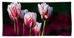 Hand Towel featuring the photograph Tulips Garden Flowers Color Spring Nature by Paul Fearn