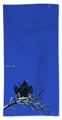 Turkey Vulture Cathartes Aura Devils Bath Towel