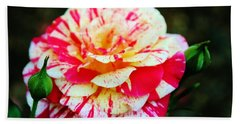 Two Colored Rose Bath Towel by Cynthia Guinn