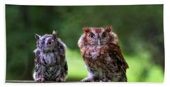Two Screech Owls Hand Towel