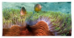 Two Skunk Anemone Fish And Indian Bulb Hand Towel