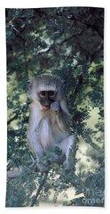 Vervet Monkey Bath Towel