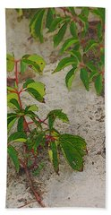 Virginia Creeper At The Beach Bath Towel