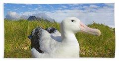 Wandering Albatross Incubating  Hand Towel by Yva Momatiuk John Eastcott